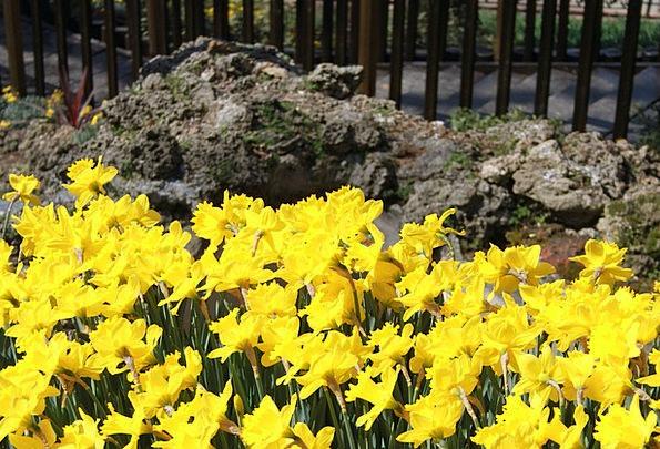 Flower Floret Landscapes Plot Nature Park Common G