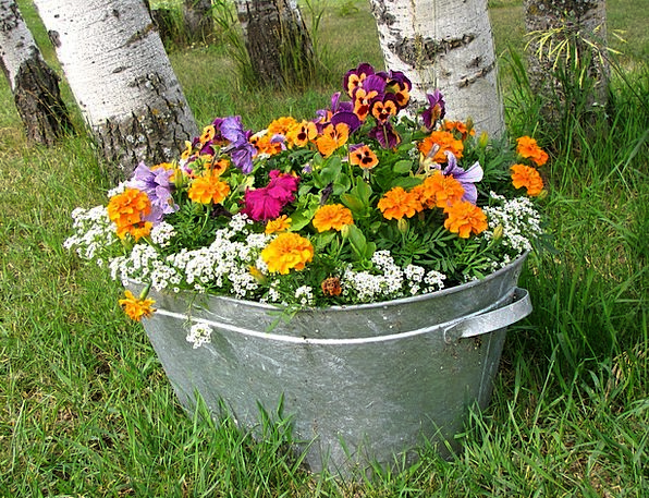 Flowers Plants Vessel Grow Produce Pot Pansies Col