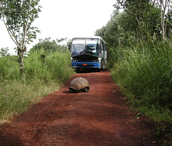 Tortoise Traffic Huge Transportation Water Aquatic