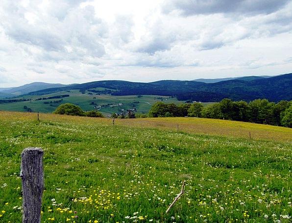 Flower Meadow Straw-hat Summer Meadow Summer Flowe