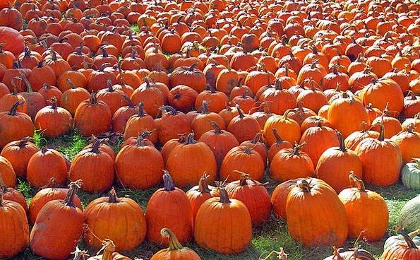Pumpkins Drink Reduction Food Autumn Fall Orange H