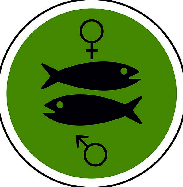 Male Masculine Feminine Fish Angle Female Marine C