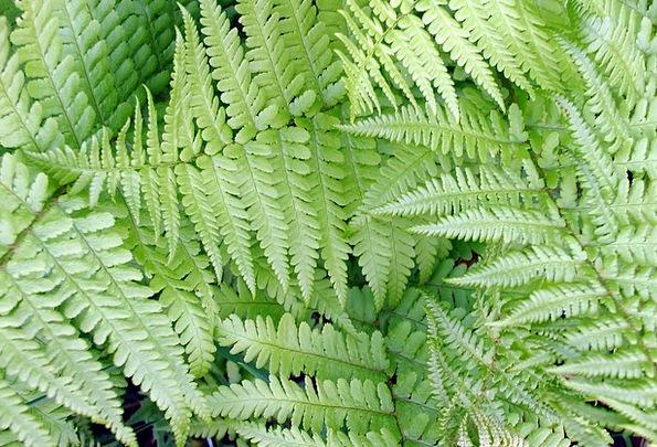 Fern Leaf Landscapes Flyers Nature Green Lime Leaf