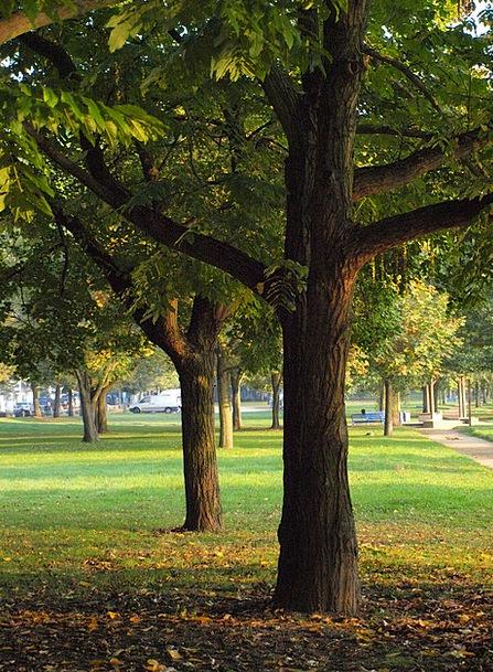 Log Record Chief Park Common Main Main Banks Morni