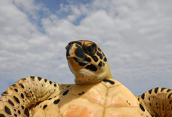 Sea Marine Landscapes Nature Sky Blue Turtle Cloud