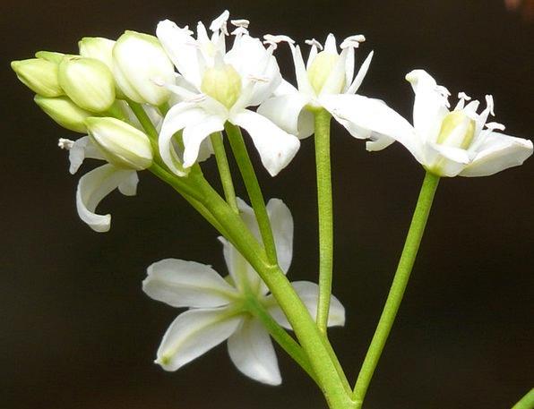 Scilla Landscapes Floret Nature Spring Coil Flower