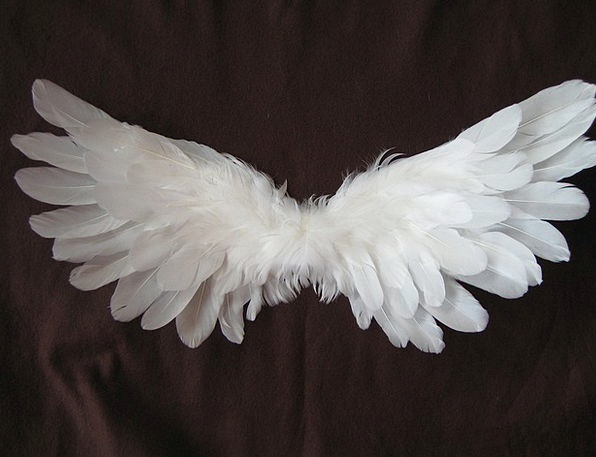 Wing Annex Quill Angel Seraph Feather