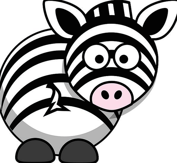Zebra Trek Africa Safari Namibia Animal Physical S