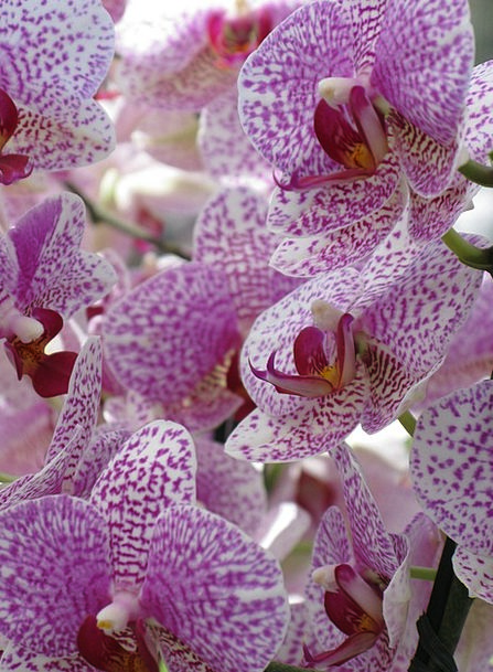 Orchids Landscapes Plants Nature Plant Vegetable F