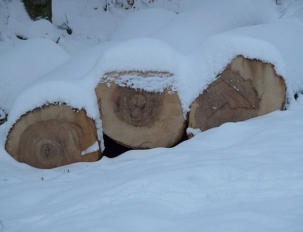 Tree Trunks Timber Winter Season Wood Log Record I