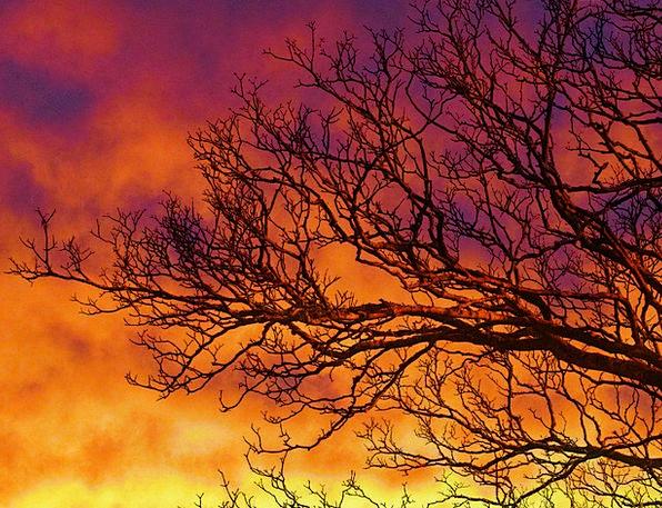 Sunset Sundown Vacation Sapling Travel Branches Tw