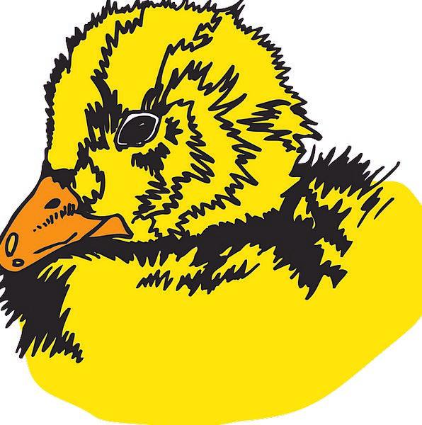 Baby Darling Skull Bird Fowl Head Duckling Free Ve
