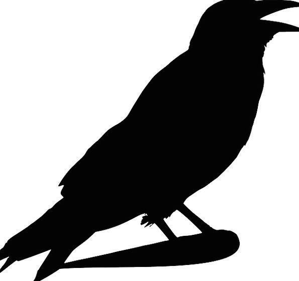 Crow Caw Scoff Bird Fowl Raven Death Halloween Fli