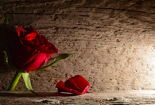 Red Rose Textures Backgrounds Wood Timber Rosenbla