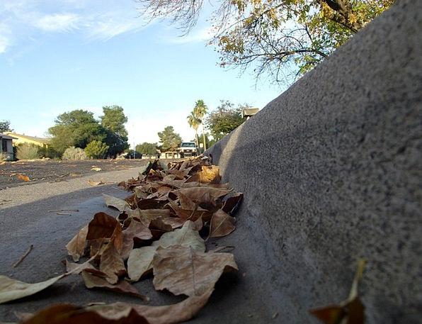Leaves Greeneries Traffic Dehydrated Transportatio