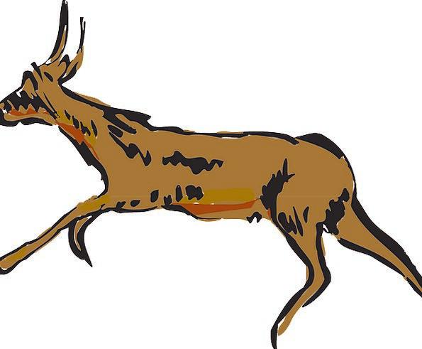 Antelope Frightened Animal Physical Scared Free Ve