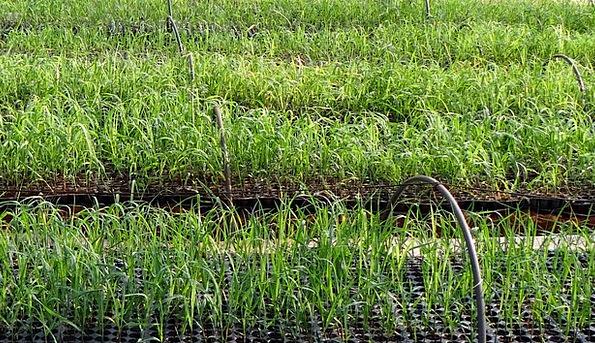 Nursery Plant sales outlet Landscapes Sprouts Natu