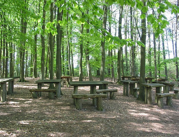 Forest Woodland Landscapes Bleachers Nature Green
