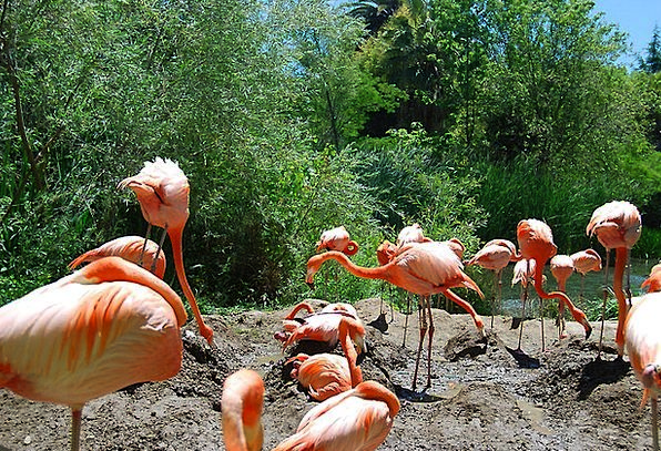 Flamingo Natures Exotic Unusual Birds Habitat Trop