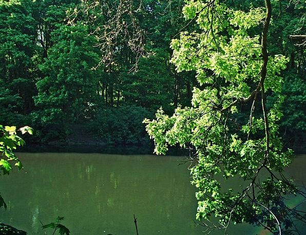 Forest Woodland Landscapes Pool Nature Trees Plant