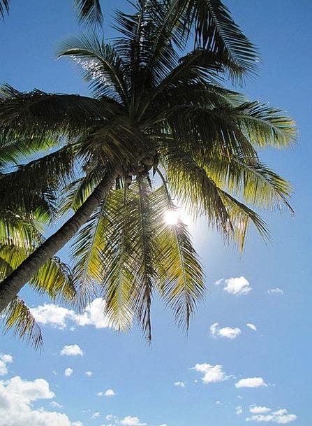 Palm Tree Landscapes Tribute Nature Plant Vegetabl