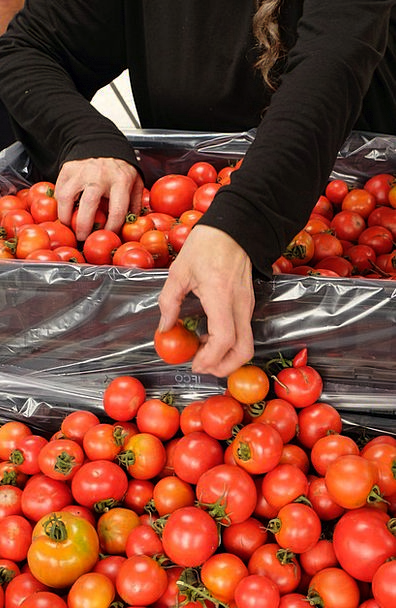 Tomatoes Fit Organic Carbon-based Healthy Market M