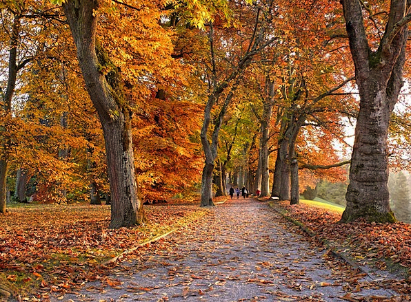 Autumn Fall Street Trees Plants Avenue Tree Lined