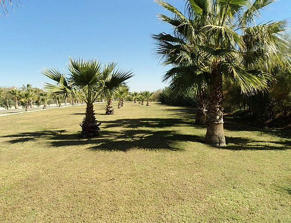 Palmenhein Landscapes Nature Turkey Palm Trees Ant