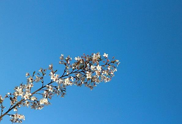 Blue Sky Sky Blue Sunny Days Views Opinions Cherry