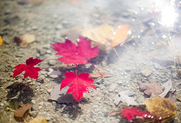 Leaves Greeneries Autumn Leaves Fall Leaves Leaves