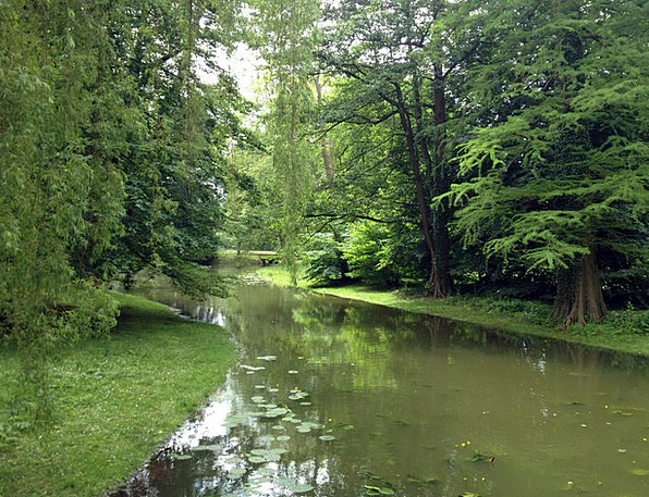 Schwerin Common Trees Plants Park