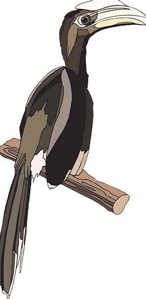 Bird Fowl Casque Hornbill Free Vector Graphics Pie