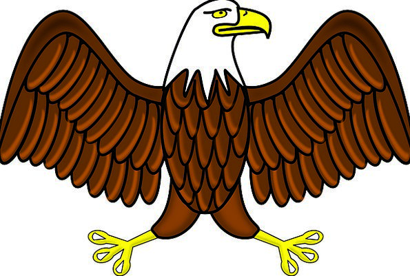 Bald Eagle Bird Fowl Eagle Raptor Wings Predator F