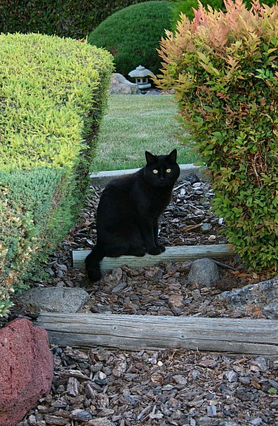 Cat Physical Garden Plot Animal Pet Domesticated F