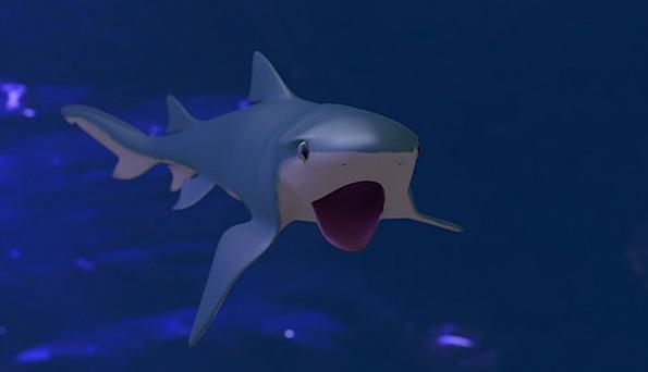 Shark Swindler Submerged Blue Azure Underwater Fis