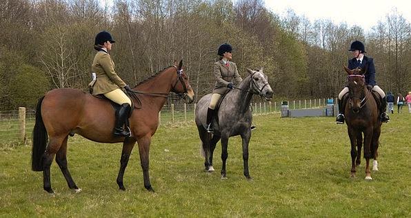 Rider Proviso Contest Horse Mount Tournament Lives