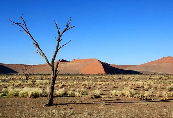 Dunes Banks Prairieland Tree Sapling Steppe Desert