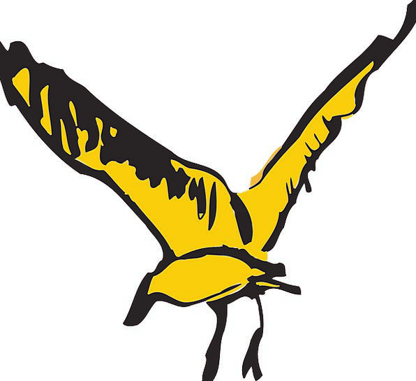 Bird Fowl Hovering Yellow Creamy Flying Wings Anne