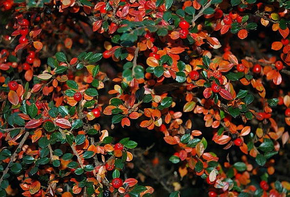 Berries Landscapes Nature Fall Reduction Autumn Le