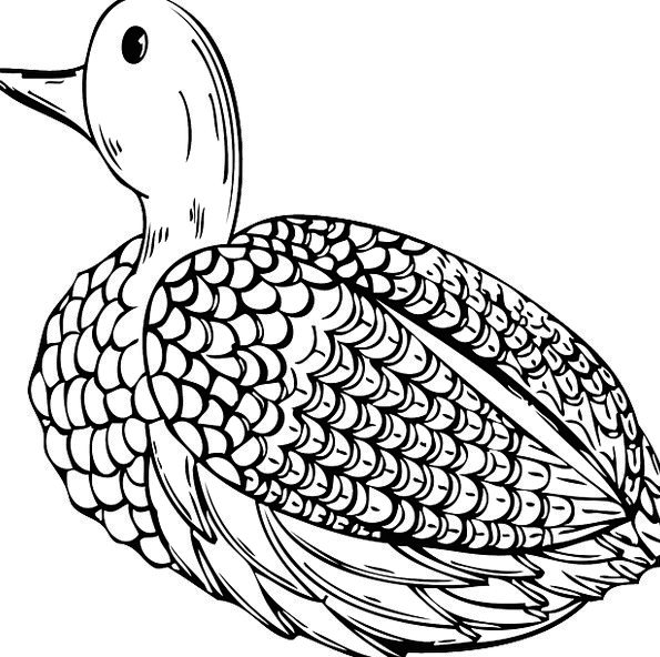 Duck Stoop Hen Fowl Drake Waterfowl Decoy Free Vec