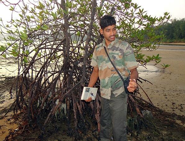 Mangrove Landscapes Woodland Nature Guide Leader F