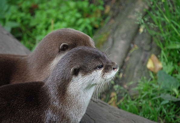 Otters Detail Head Skull Close-Up Mammal Creature