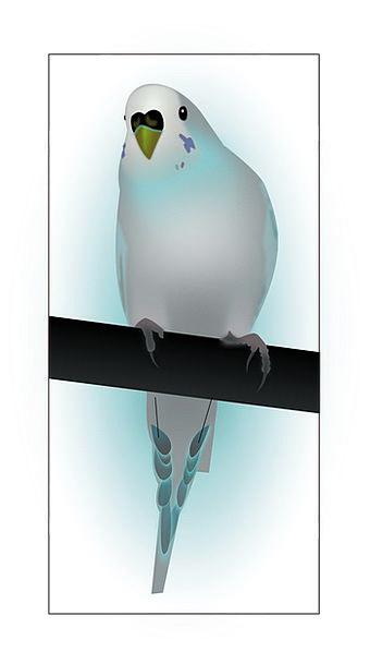 Bird Fowl Parrot Imitator Budgerigar Fauna Wildlif