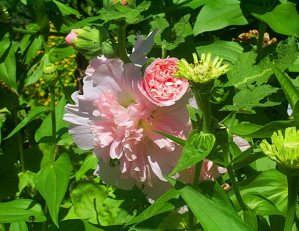 Flowers Plants Landscapes Flushed Nature Buds Spro
