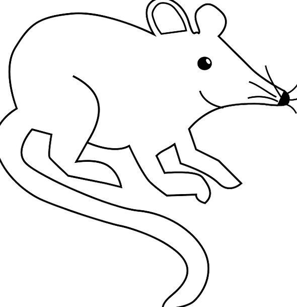Mouse Rat Swine Rodent Field Mouse Pest Lab Rat Fr