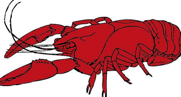 Lobster Shellfish Red Bloodshot Crustaceans Legs L
