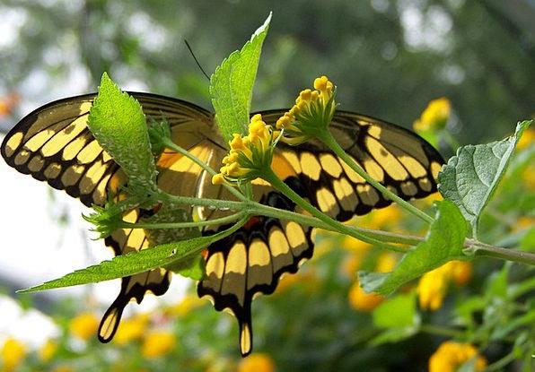 Under Below Beneath Butterfly Underneath Summer St