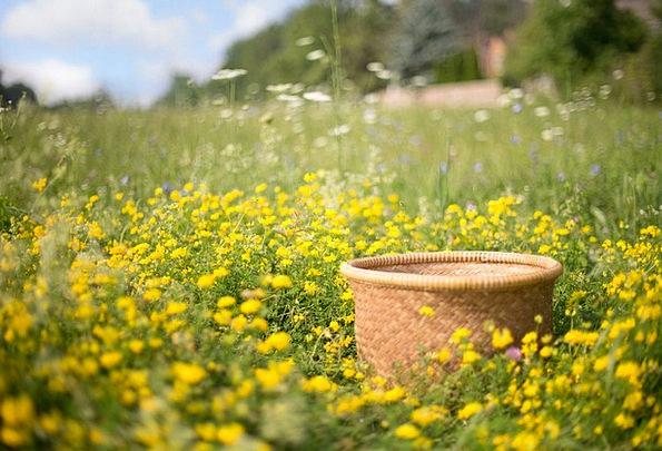 Basket Bag Landscapes Weeds Nature Summer Straw-ha
