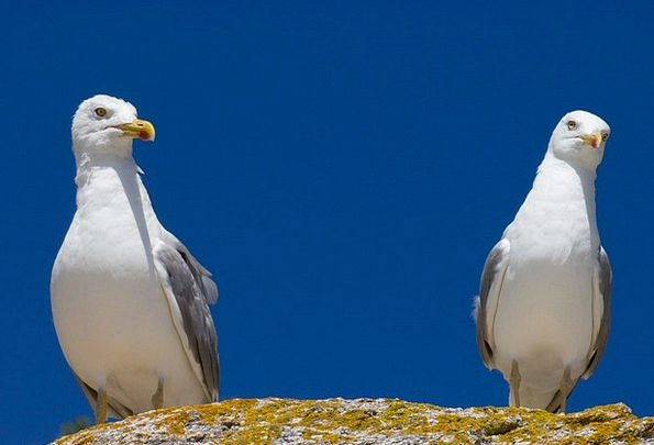 Seagulls Physical Ave Animal Wings Annexes Birds A