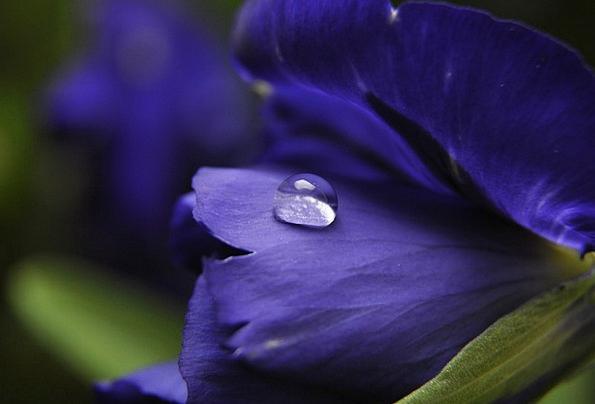 Flower Floret Landscapes Plot Nature Nature Countr